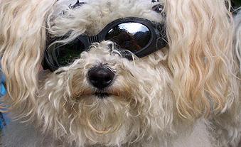 Vorsorge und Therapien zur Gesunderhaltung Ihrer Haustiere